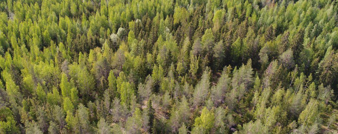 Ostotoimeksianto: metsätila