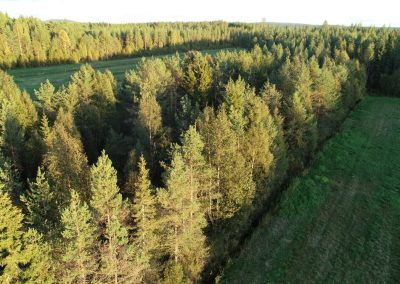 Kuusamossa 0,9 ha metsämääräala